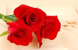 Rosas vermelhas no fundo de creme fotografia de stock