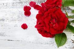 Rosas vermelhas no fundo de madeira branco Imagens de Stock Royalty Free
