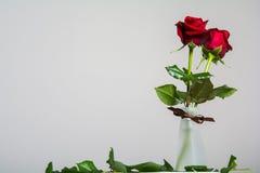 Rosas vermelhas no fundo vazio com espaço para o texto Fotos de Stock