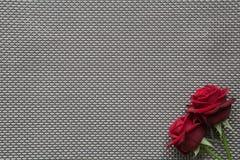 Rosas vermelhas no fundo vazio da grade Imagens de Stock Royalty Free