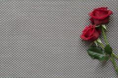 Rosas vermelhas no fundo vazio da grade Fotografia de Stock Royalty Free