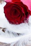Rosas vermelhas no veludo Fotografia de Stock