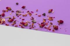 Rosas vermelhas pequenas no fundo violeta e branco Fotografia de Stock Royalty Free