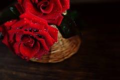 Rosas vermelhas que espirram a água Foto de Stock