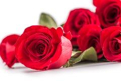 Rosas vermelhas Ramalhete das rosas vermelhas isoladas no branco Fotografia de Stock Royalty Free