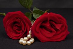 Rosas vermelhas românticas fotos de stock