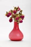 Rosas vermelhas secadas no vaso cor-de-rosa no fundo branco Fotos de Stock Royalty Free