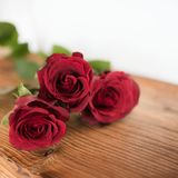 Rosas vermelhas simbólicas para o dia de Valentim Fotografia de Stock Royalty Free
