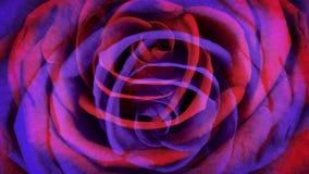 Rosas violetas vermelhas filme