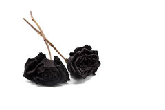 Rosas Withered preto imagens de stock royalty free