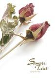 Rosas withered vermelhas fotografia de stock