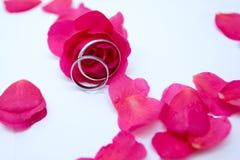 Rosas y anillos Imagen de archivo libre de regalías