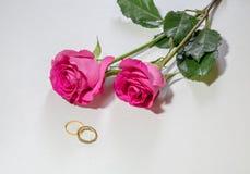 Rosas y anillos de compromiso rosados románticos del oro en el fondo blanco Imagenes de archivo