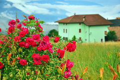 Rosas y casa Imagenes de archivo