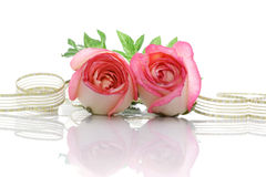 Rosas y cinta Imagen de archivo