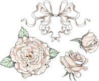 Rosas y cintas, casandose decoraciones ilustración del vector