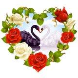 Rosas y cisnes de los pares Imagen de archivo libre de regalías