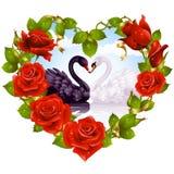 Rosas y cisnes rojos de los pares Fotografía de archivo