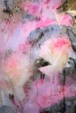 Rosas y condensación Imagen de archivo