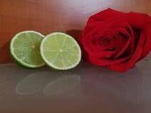 Rosas y frutas Imagen de archivo libre de regalías