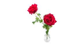 Rosas y hojas aisladas frescas en la botella de cristal sobre el fondo blanco foto de archivo