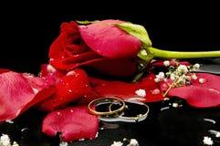 Rosas y pétalos color de rosa Foto de archivo libre de regalías