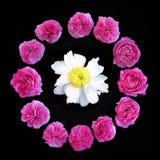 Rosas y Peony fotos de archivo libres de regalías