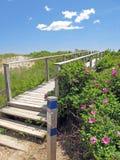 Rosas y puente para varar a Wells Maine Foto de archivo libre de regalías