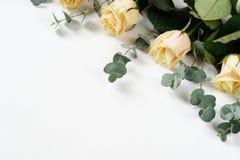 Rosas y ramas del eucalipto en un fondo blanco día del ` s de la madre, casandose fotografía de archivo libre de regalías