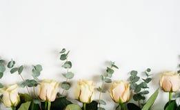 Rosas y ramas del eucalipto en un fondo blanco día del ` s de la madre, casandose imagen de archivo libre de regalías