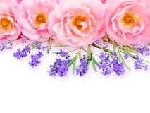 Rosas y ramo abiertos rizados rosados de la lavanda de Provence foto de archivo libre de regalías