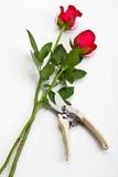Rosas y tijeras imágenes de archivo libres de regalías