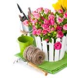 Rosas y tulipanes rosados con los utensilios de jardinería Fotos de archivo libres de regalías