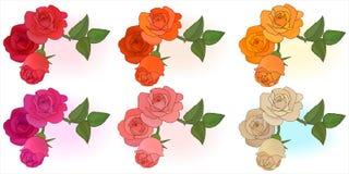 Rosdesignbeståndsdelar i sex färger Arkivfoto