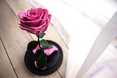 Rose éternelle de rose dans un flacon Image stock