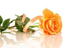Rose с тесемкой Стоковые Фотографии RF