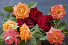 Rose Fotografia Stock Libera da Diritti