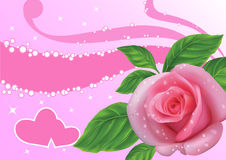 Rose. On a pink background Royalty Free Stock Images
