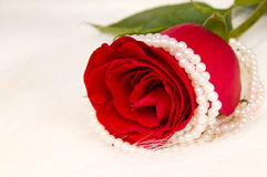 Rose. Beautiful red rose and pearl necklace; lay on white to fur Stock Images
