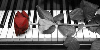The rose. Lying on the keyboard of a grand piano stock photography