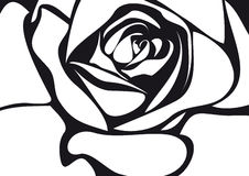 Rose. The illustration of a  white rose Stock Photos