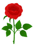 Rose. Beautiful flower rose on white background. Vector object isolated Royalty Free Stock Photos