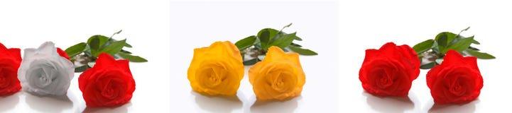 Rose Fotografie Stock