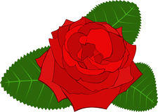 Rose. Image of Rose. Vector illustration Royalty Free Stock Image
