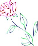 Rose. Isolated illustrated brush stroke rose Royalty Free Stock Images