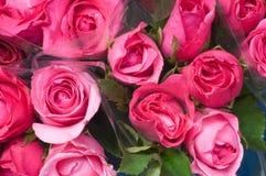 Free Rose Stock Image - 15752301