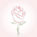 Rose. Lizenzfreies Stockfoto