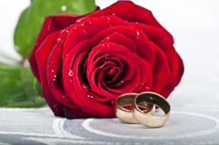 Rose. Wet rose and wedding rings on white silk Royalty Free Stock Image