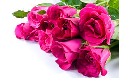 Rose immagini stock