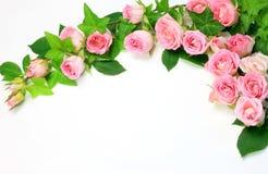 Rose Royalty Free Stock Photos